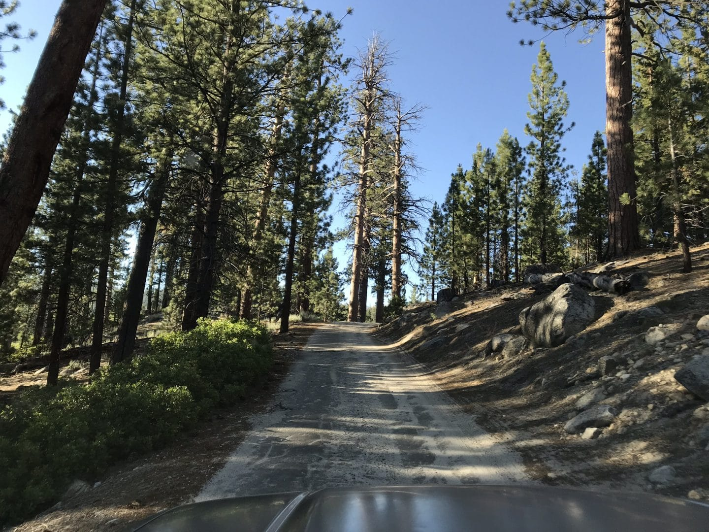 Kaiser Pass Road in sequoia national park.