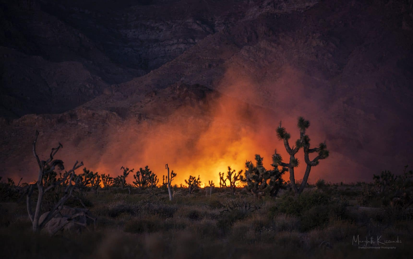 Joshua Trees under siege from flames.  Nikon Z6 - Nikkor 70-200mm. Copyright 2020 MaryBeth Kiczenski.