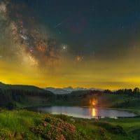 Midsummer Night's Dream – Flowers Foreground